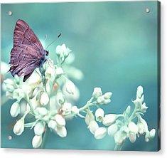 Buterfly Dreamin' Acrylic Print by Mark Fuller