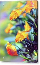 Acrylic Print featuring the photograph Buttercups by Jessica Jenney