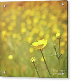 Buttercups Acrylic Print by Lyn Randle