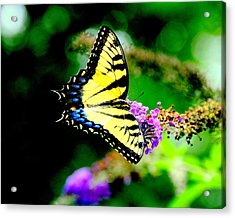 Butterflie Acrylic Print by Aron Chervin