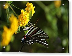Butterflies And Blooms Acrylic Print