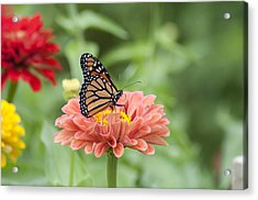 Butterflies And Blossoms Acrylic Print by Bill Cannon