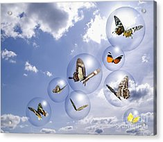 Butterflies And Bubbles Acrylic Print