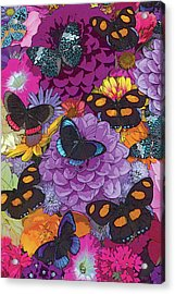 Butterflies And Flowers 2 Acrylic Print