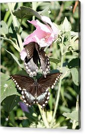 Butterflies Are Free 3 Acrylic Print