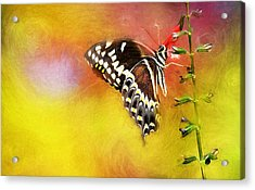 Butterflies Are Self Propelled Flowers Acrylic Print