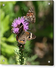 Acrylic Print featuring the photograph Butterflies And Purple Flower by Cathy Harper