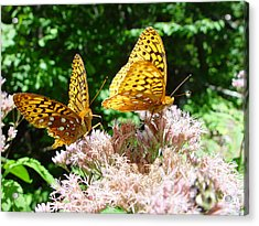 Butterflies Acrylic Print by Eric Workman
