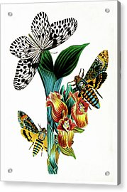 Butterflies, Moths And Orchids, Vintage Botanical Painting Acrylic Print by Tina Lavoie
