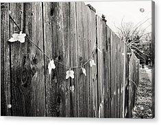 Butterflies On A Rustic Fence Acrylic Print