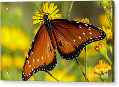 Butterfly 1 Acrylic Print