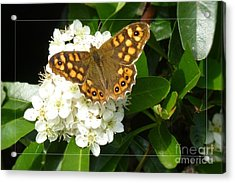Acrylic Print featuring the photograph Butterfly 1 by Jean Bernard Roussilhe