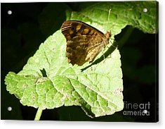 Acrylic Print featuring the photograph Butterfly 2 by Jean Bernard Roussilhe