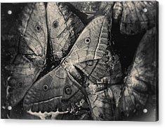 Butterfly #2056 Acrylic Print