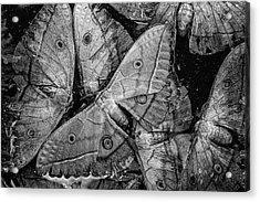 Butterfly #2056 Bw Acrylic Print