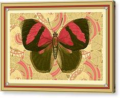 Butterfly 26 Acrylic Print