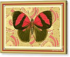 Butterfly 27 Acrylic Print
