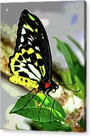 Butterfly 7 Acrylic Print