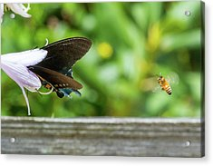 Acrylic Print featuring the photograph Butterfly And Bee by D K Wall