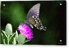 Butterfly And Thistle Acrylic Print by Jeff Kolker