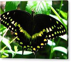 Butterfly Art 3 Acrylic Print by Greg Patzer