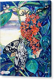 Butterfly At Mac Acrylic Print by Norma Boeckler