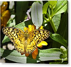 Acrylic Print featuring the photograph Butterfly At Rest by Bill Barber