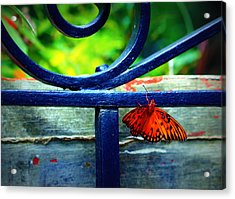 Butterfly At The Gate Acrylic Print