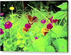 Butterfly At Work Acrylic Print by Jill Tennison