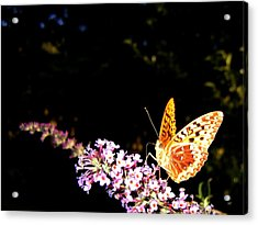 Butterfly Banquet 1 Acrylic Print by Will Borden