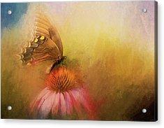 Butterfly Beaute Acrylic Print