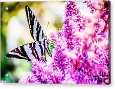 Butterfly Beautiful  Acrylic Print by Peggy Franz