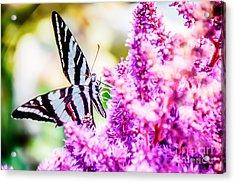 Butterfly Beautiful  Acrylic Print
