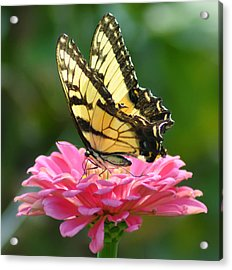 Butterfly Acrylic Print by Bill Cannon