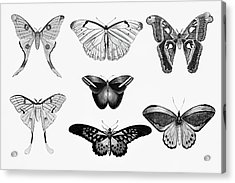 Butterfly Black And White Wall Art Acrylic Print