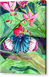 Butterfly Buffet Acrylic Print by Mindy Newman