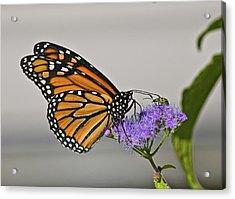 Butterfly Bug Inspector Acrylic Print