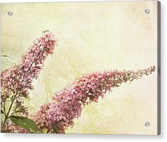 Acrylic Print featuring the digital art Butterfly Bush by Margaret Hormann Bfa