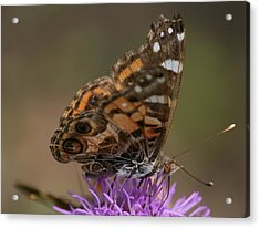 Acrylic Print featuring the photograph Butterfly by Cathy Harper