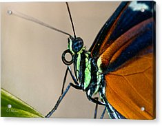 Butterfly Closeup Acrylic Print by Christopher Holmes
