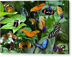 Butterfly Collage Acrylic Print by Cabral Stock