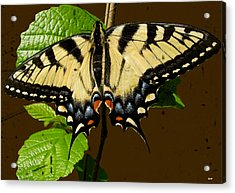 Butterfly Collection Design Acrylic Print by Debra     Vatalaro