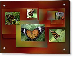 Acrylic Print featuring the photograph Butterfly Colllage by Irma BACKELANT GALLERIES