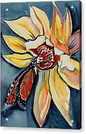 Butterfly -cross Hatch Acrylic Print by Janet Doggett