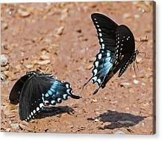 Acrylic Print featuring the photograph Butterfly Dance by Ron Dubin