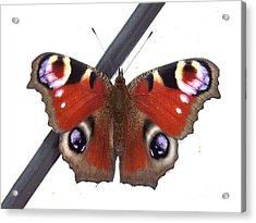 Butterfly Acrylic Print by Deborah Brewer