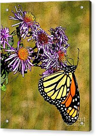 Butterfly Delight Acrylic Print by Diane E Berry