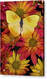 Butterfly Detail Acrylic Print by JQ Licensing
