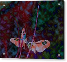 Butterfly Dream Acrylic Print