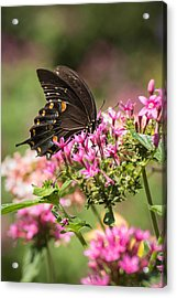 Acrylic Print featuring the photograph Butterfly Dream by Julie Andel